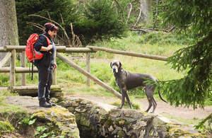 Urlaub mit Hund im Nationalpark Harz